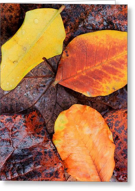 So Cal Autumn Greeting Card by Heidi Smith