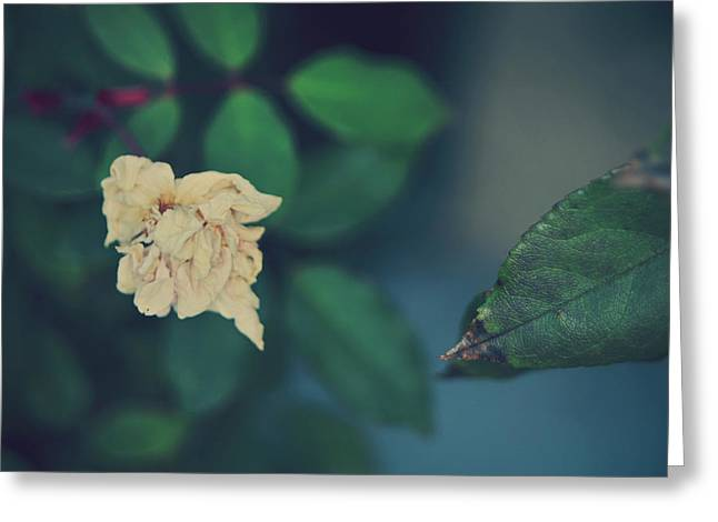 Rose Bushes Greeting Cards - So Its Goodbye To Love Greeting Card by Laurie Search