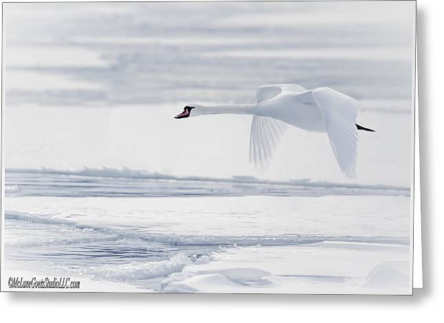 Flying Mute Swan Greeting Cards - So long Winter Swan Greeting Card by LeeAnn McLaneGoetz McLaneGoetzStudioLLCcom