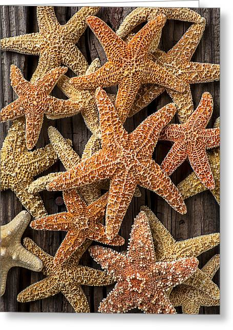 Orange Starfish Greeting Cards - So many starfish Greeting Card by Garry Gay
