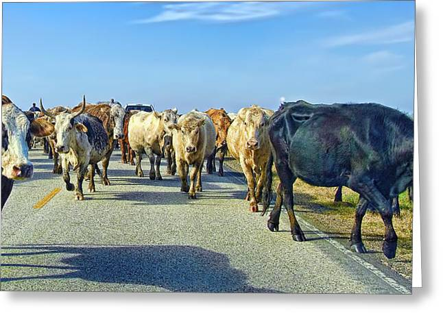 So This Is What Farm To Market Road Means - Panoramic Greeting Card by Gary Holmes