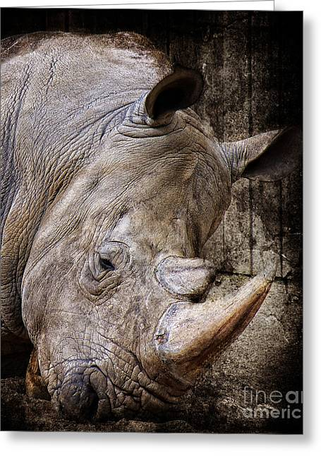 So Tired Rhino Greeting Card by Angela Doelling AD DESIGN Photo and PhotoArt