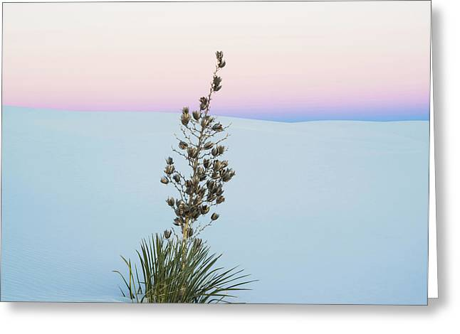 Soaptree Yucca Yucca Elata In Predawn Greeting Card by Panoramic Images