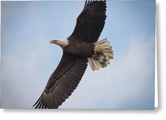 Jahred Allen Photography Greeting Cards - Soar Greeting Card by Jahred Allen