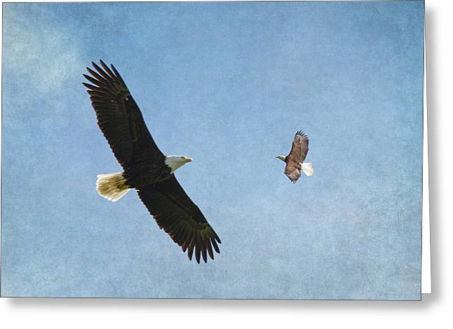 Eagle In Flight Greeting Cards - Soar on the Wings of Eagles Greeting Card by Angie Vogel