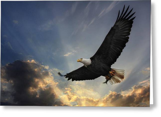 Eagles Greeting Cards - Soar to new heights Greeting Card by Lori Deiter