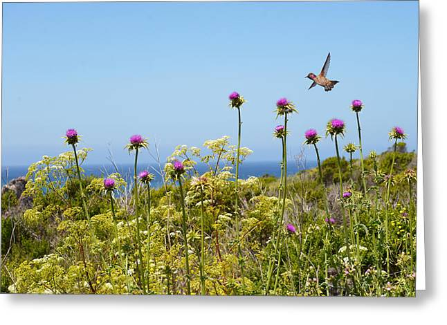 Coast Hwy Ca Greeting Cards - Soaring Beauty Greeting Card by Lynn Bauer