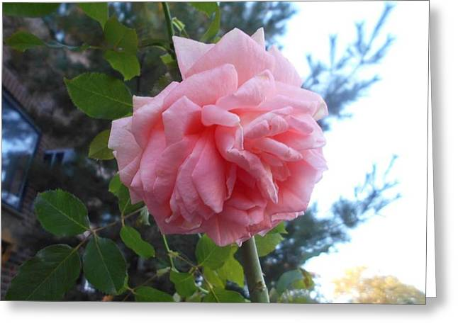 Roze Greeting Cards - Soaring Coral Greeting Card by Carolyn Quinn