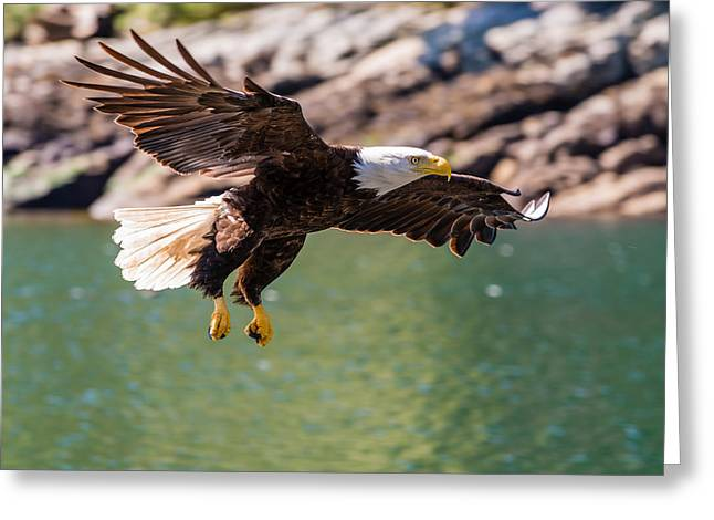 Soaring Eagle Greeting Card by Ian Stotesbury