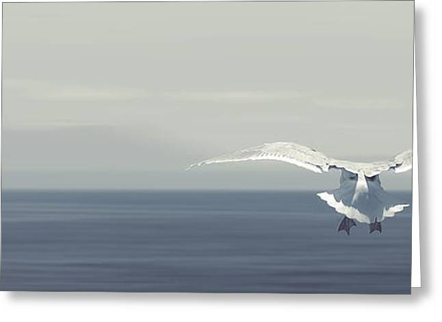 Flying Seagull Greeting Cards - Soaring Free Greeting Card by Lisa Knechtel