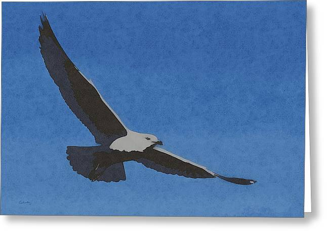 Seabirds Digital Art Greeting Cards - Soaring Gull Greeting Card by Ernie Echols
