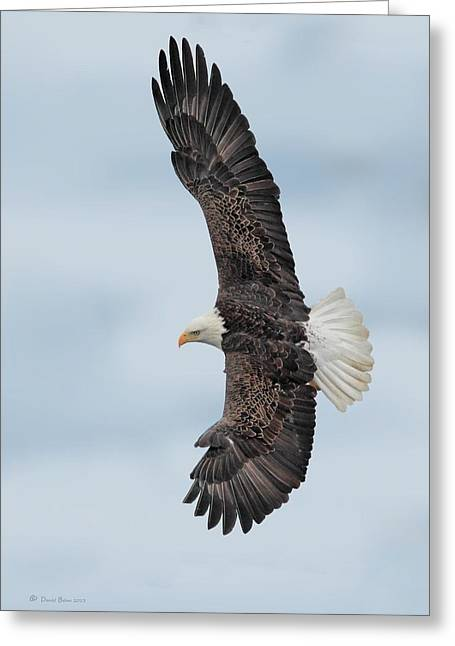 Flying Pyrography Greeting Cards - Soaring High Greeting Card by Daniel Behm