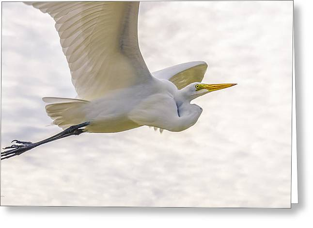 Yellow Beak Greeting Cards - Soaring High Great Egret Greeting Card by Julie Palencia