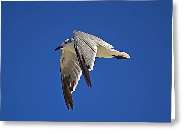 Flying Animal Greeting Cards - Soaring High Greeting Card by Kenneth Albin