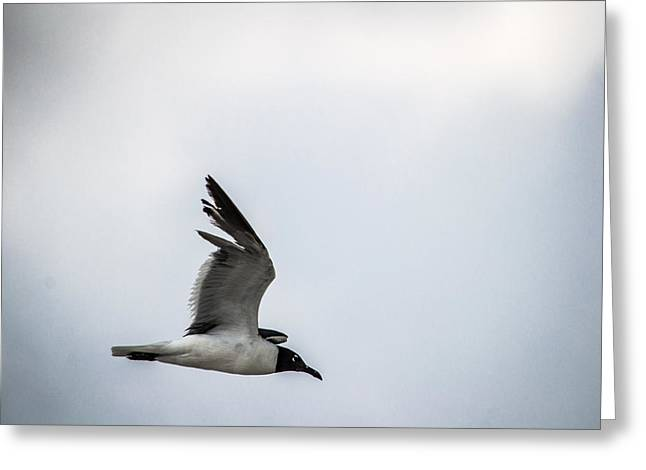 Beach Photograph Greeting Cards - Soaring into the Storm Greeting Card by Shelby  Young
