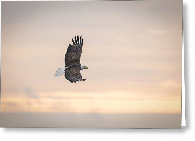 American Icons Photographs Greeting Cards - Soaring Into The Sunrise Greeting Card by Thomas Young