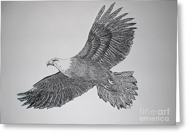 Drawing Of Eagle Greeting Cards - Soaring Greeting Card by Judy Sprague