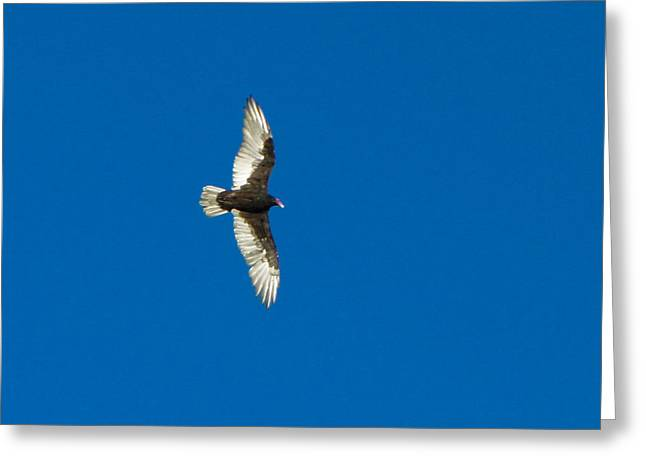 Winthrop Digital Art Greeting Cards - Soaring Greeting Card by Omaste Witkowski