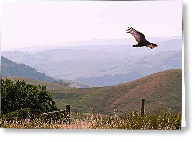 Soaring Over California - Condor in Morro Bay Coastal Hills Greeting Card by Artist and Photographer Laura Wrede