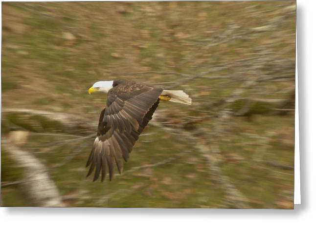 Eagle In Flight Greeting Cards - Soaring over  Greeting Card by Jeff  Swan