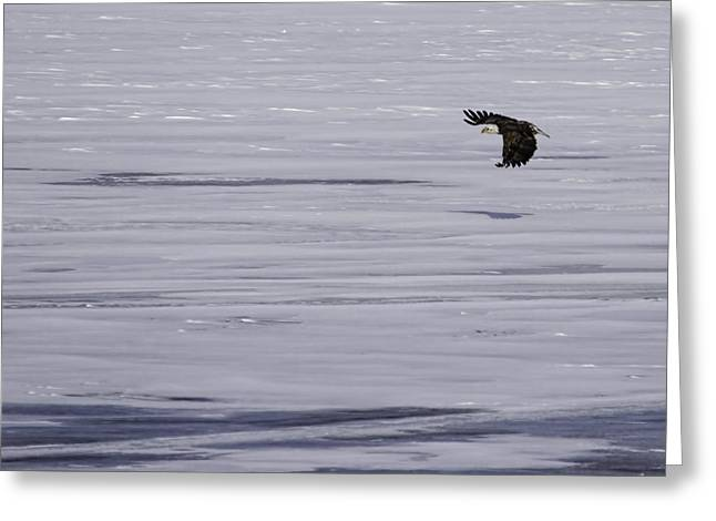 Eagle Greeting Cards - Soaring Over The Ice Greeting Card by Thomas Young