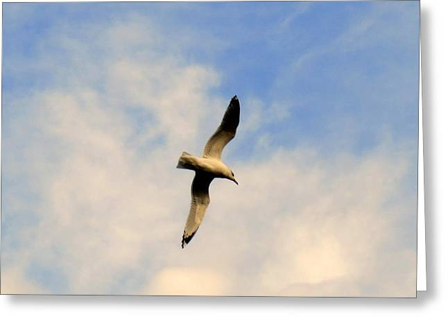 Take-out Digital Art Greeting Cards - Soaring Overhead Greeting Card by Kay Novy