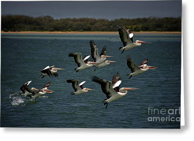 Soaring Pelicans 2 Greeting Card by Heng Tan