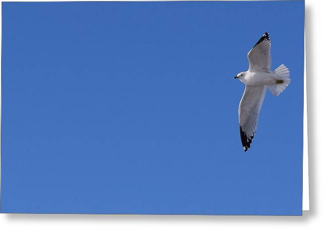Flying Seagull Greeting Cards - Soaring Seagulls Greeting Card by Ashley Craven