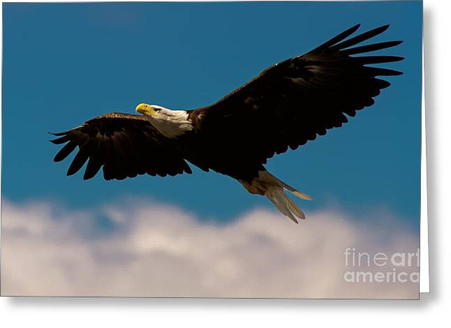 Eagles In Flight Greeting Cards - Soaring To Greater Heights Greeting Card by Heidi Piccerelli