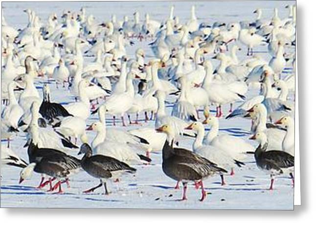 Bird Congregation Greeting Cards - Social Networking Greeting Card by Scott Cameron