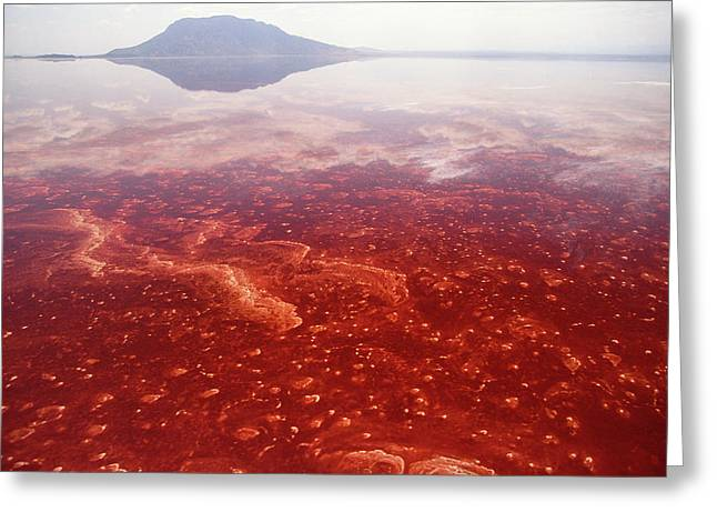 Alkaline Greeting Cards - Soda And Algae Formation On Lake Natron Greeting Card by Gerry Ellis