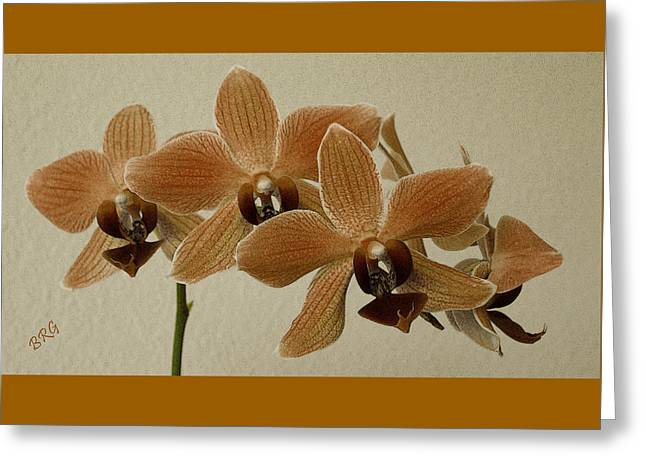 Sofia Orchid Greeting Card by Ben and Raisa Gertsberg