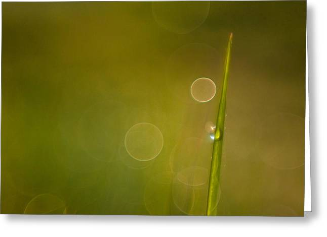 Dew Greeting Cards - Soft and dreamy Greeting Card by Davorin Mance