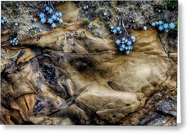 Point Lobos Greeting Cards - Soft And Hard Greeting Card by Robert Woodward