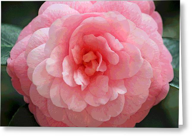 Floral Digital Art Greeting Cards - Soft and Pink Greeting Card by Suzanne Gaff