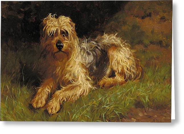 Domestic Greeting Cards - Soft Coated Wheaten Terrier  Greeting Card by Alfred Duke