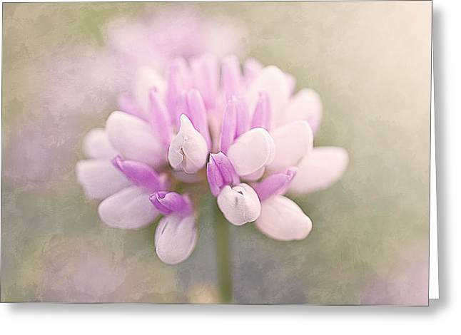 Soft Color Clover Greeting Card by Faith Simbeck