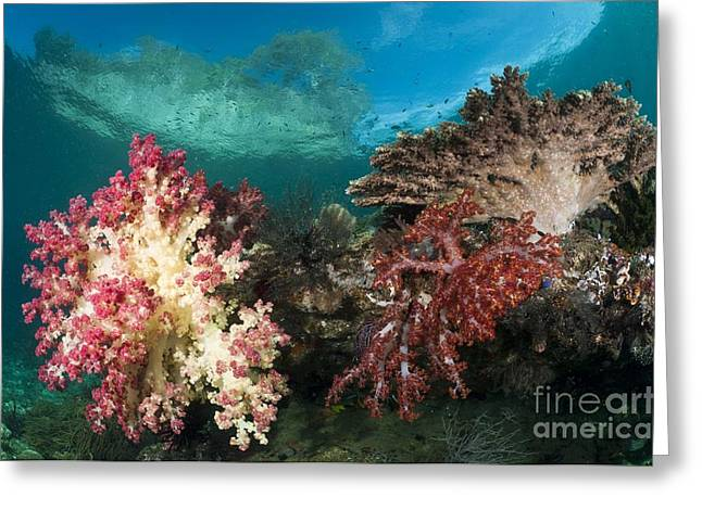 Zoology Greeting Cards - Soft Corals Growing On A Current-swept Greeting Card by Matthew Oldfield