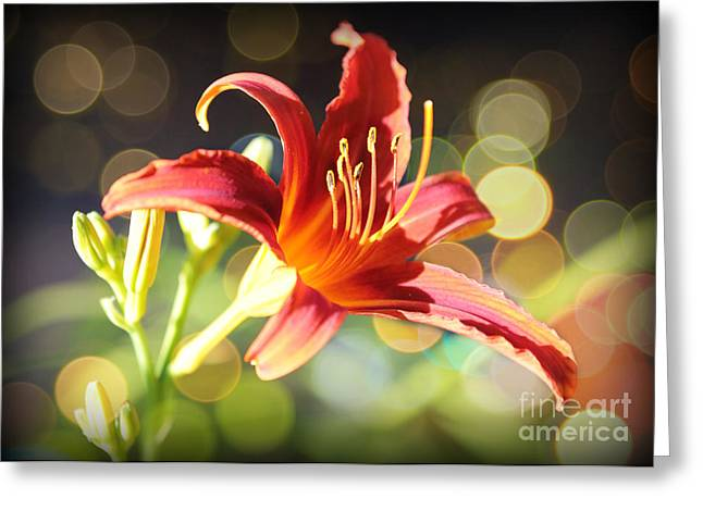 Sunlight On Flowers Greeting Cards - Soft Daylily Greeting Card by Carol Groenen