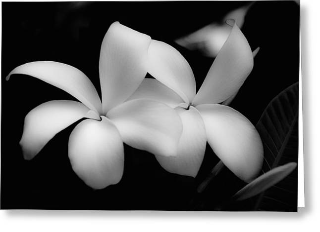 Close Up Floral Greeting Cards - Soft Floral Beauty Greeting Card by Ron White