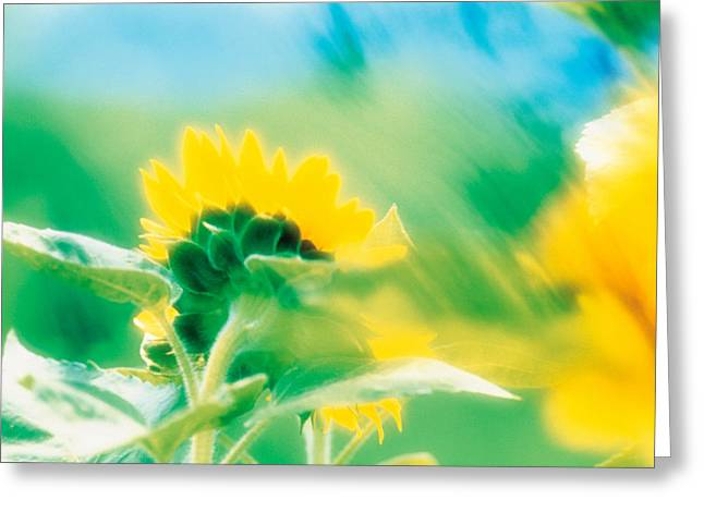 Yellow Leaves Photographs Greeting Cards - Soft Focus Of Yellow Flower, Blurred Greeting Card by Panoramic Images