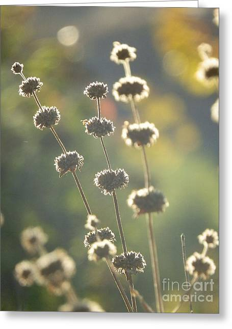Soft Light Greeting Cards - Soft Focus Greeting Card by Robert Ball