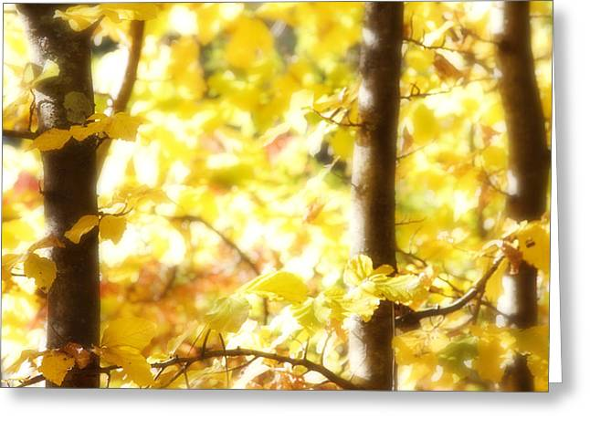 Outdoor Photographs Greeting Cards - Soft forest Greeting Card by Les Cunliffe