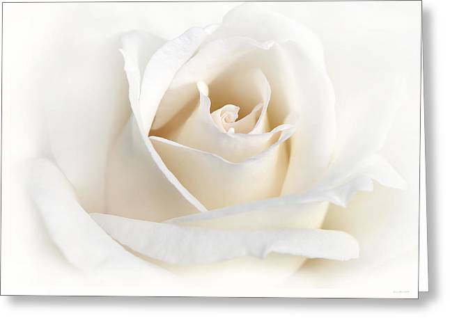 Ivory Flower Greeting Cards - Soft Ivory Rose Flower Greeting Card by Jennie Marie Schell