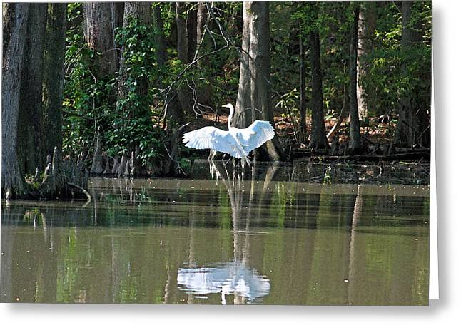 Low Country Watercolor Greeting Cards - Soft Landing II Greeting Card by Suzanne Gaff