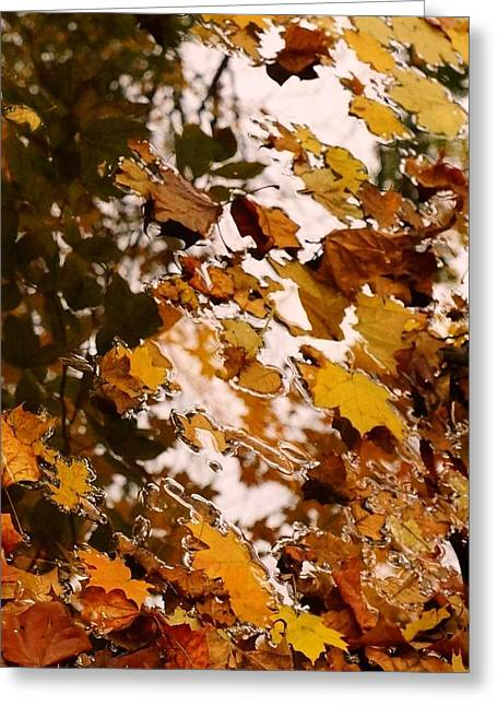 Abstract Water And Fall Leaves Greeting Cards - Soft Landing Greeting Card by Photographic Arts And Design Studio