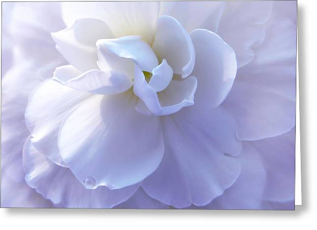 Begonia Garden Greeting Cards - Soft Lavender Begonia Flower Greeting Card by Jennie Marie Schell