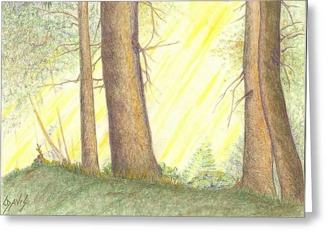 Soft Light Greeting Card by Lew Davis