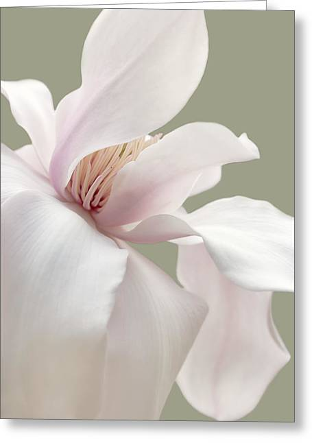 Magnoliaceae Greeting Cards - Soft Light Magnolia Flower  Greeting Card by Jennie Marie Schell
