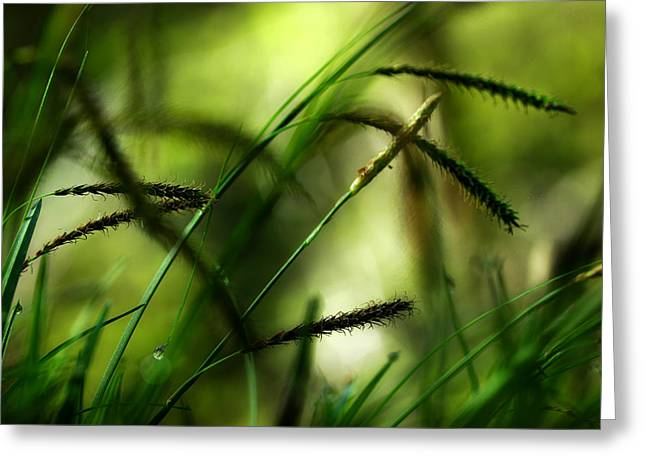 Breezy Greeting Cards - Soft Morning Breeze Greeting Card by Michael Eingle